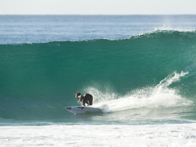 east_cape_wave