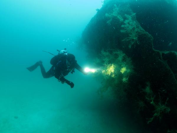 black coral- wreck Lapas_resized